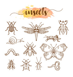 set of insects doodle sketch vector image