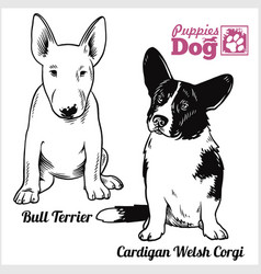 Bull terrier and cardigan welsh corgi puppy vector