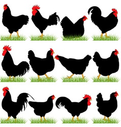 12 Roosters and Hans Silhouettes Set vector image vector image