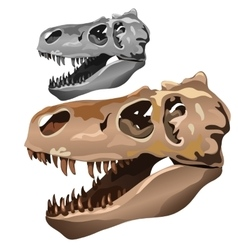 Fossilized skull of ancient animal vector image