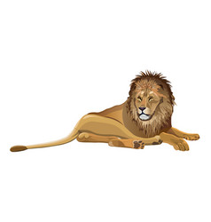 african lion lying vector image
