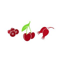 Red berries vector