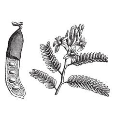 Vintage Tamarind leaf vector