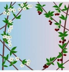 cherry framework vector image