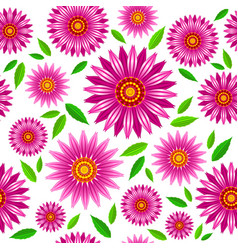 Echinacea purpurea flowers seamless pattern vector