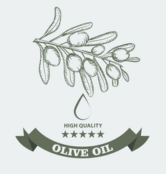 olive oil package design for label with vintage vector image