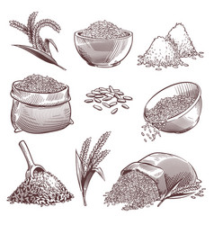 Sketch rice vintage hand drawn asian grains and vector