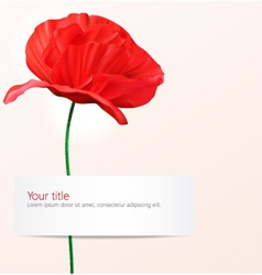 background with Poppy flower vector image vector image