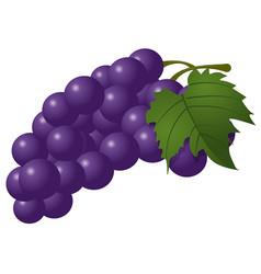blue grape bunch vector image