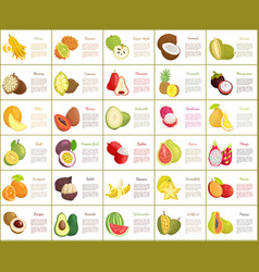 citron and kiwano posters set vector image