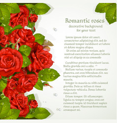 decorative background with red roses for your text vector image