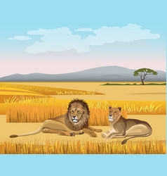 Lioness and lion lay in savanna vector