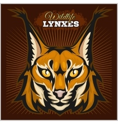 Lynx mascot logo Head of lynxes vector