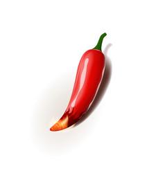 Realistic chili pepper vector