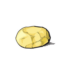 sketch cartoon ripe raw peeled potato vector image