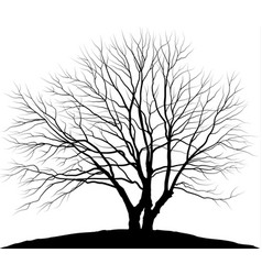 Tree silhouette oak without vector
