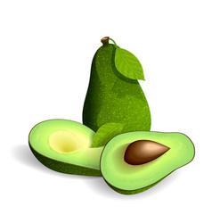 fresh avocado isolated on white vector image