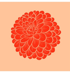 flower Dahlia drawn in graphical style vector image vector image