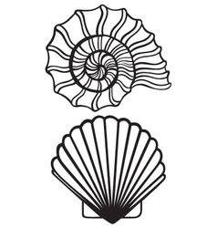 Sea shells vector image vector image