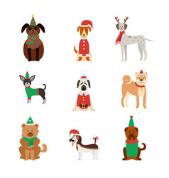dog breeds cute in christmas clothes and hats flat vector image
