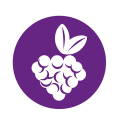Grapes fruit isolated icon vector