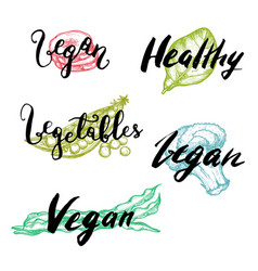 healthy vegetable hand drawn lettering set vector image