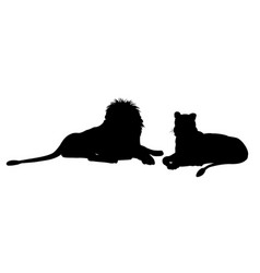 Pair of lions lying down vector
