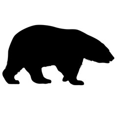 Silhouette polar bear on a white background vector