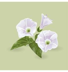 Delicate purple flowers vector image vector image