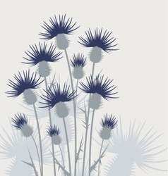 Thistles in the meadow vector image vector image