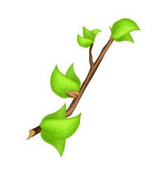 Branch green leaf buds spring vector