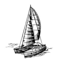 catamaran sailboat monochrome vector image