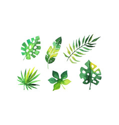 green tropical leaves collection beautiful exotic vector image
