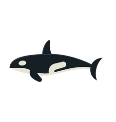 killer orca whale vector image