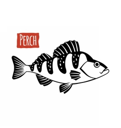 Perch black and white vector image