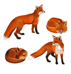 red fox set vector image