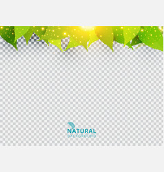 Spring summer natural green background with vector