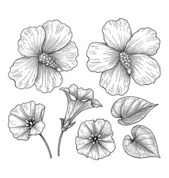 hand drawn monochrome hibiscus and bindweed vector image