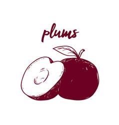 line art fruit plims hand drawn vector image