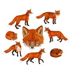 Red fox set vector
