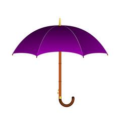 umbrella in purple design vector image