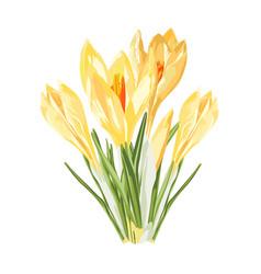 Yellow spring crocus flowers bouquet vector