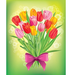 Bouquet of fresh spring tulips different colors vector image vector image