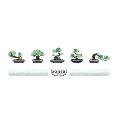 bonsai trees and pots set flat vector image