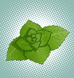 Mint leaves Medicinal plant vector image