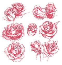Roses Drawing Set vector