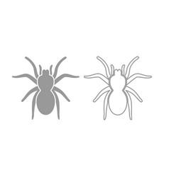 spider or tarantula icon grey set vector image