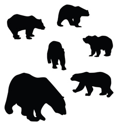 sweet and beautiful bears vector image