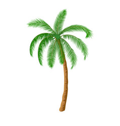 a palm tree vector image