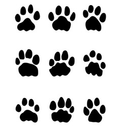 footprints of lions vector image vector image